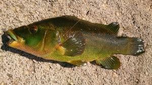 Prachtig gekleurde vissen!